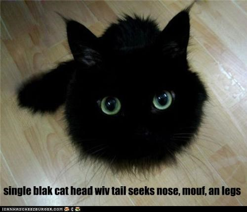single blak cat head wiv tail seeks nose, mouf, an legs