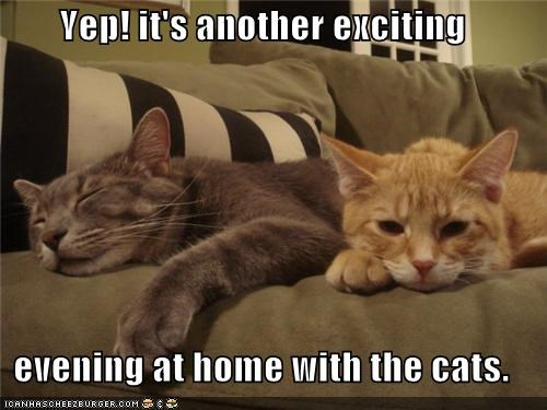 Yep! it's another exciting   evening at home with the cats.