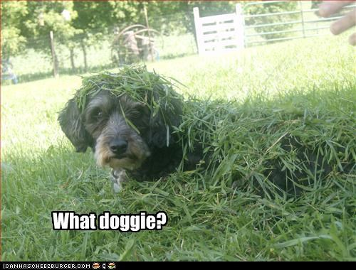 What doggie?