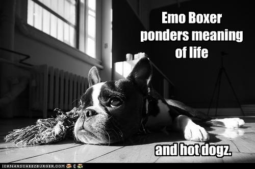 boston terrier,emo,puppy,the meaning of life,thinking