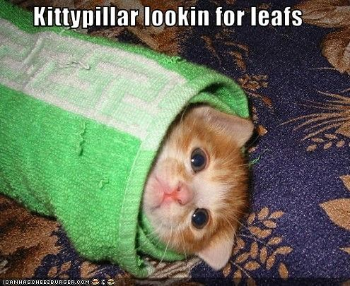 Kittypillar lookin for leafs