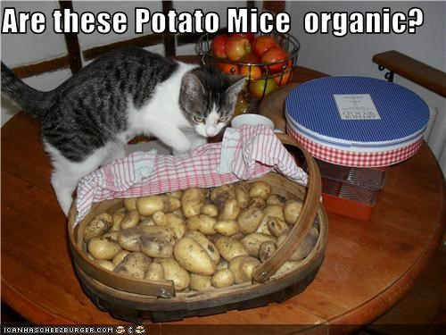 Are these Potato Mice  organic?