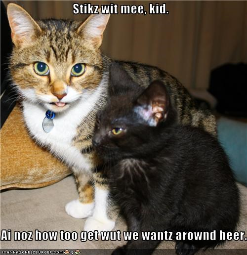 helping,kitten
