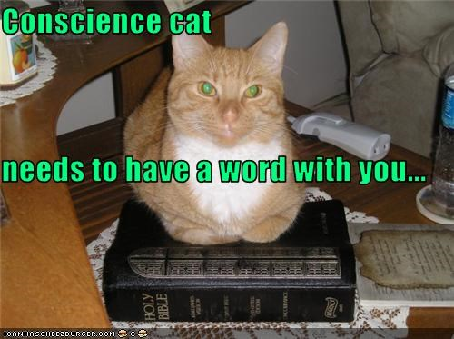 Conscience cat  needs to have a word with you...