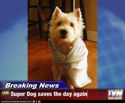 Breaking News - Super Dog saves the day again