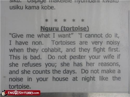 horoscope,noisy,relationships,tortoise
