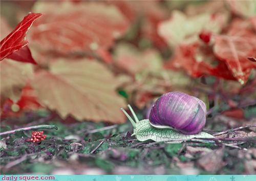 colors,snail,whatsit wednesday