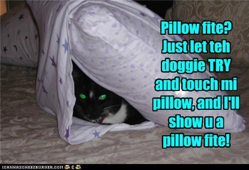 Pillow fite? Just let teh doggie TRY  and touch mi pillow, and I'll show u a  pillow fite!