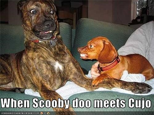 When Scooby doo meets Cujo