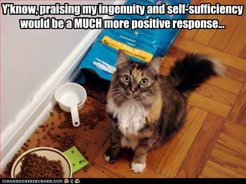 caption,captioned,cat,demanding,food,ingenuity,mess,noms,praise,rebuttal,response,scolded,self-sufficiency,unhappy