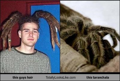 dreadlocks,hair,spider,tarantula