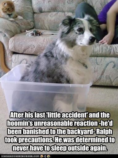 After his last 'little accident' and the hoomin's unreasonable reaction -he'd been banished to the backyard- Ralph took precautions. He was determined to never have to sleep outside again.