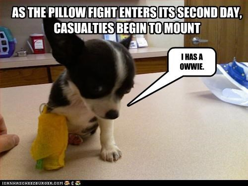 AS THE PILLOW FIGHT ENTERS ITS SECOND DAY,  CASUALTIES BEGIN TO MOUNT