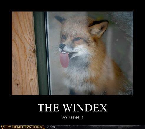 THE WINDEX