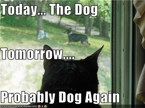 cat,dogs,stalker,window