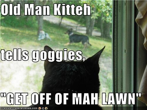"Old Man Kitteh tells goggies, ""GET OFF OF MAH LAWN"""