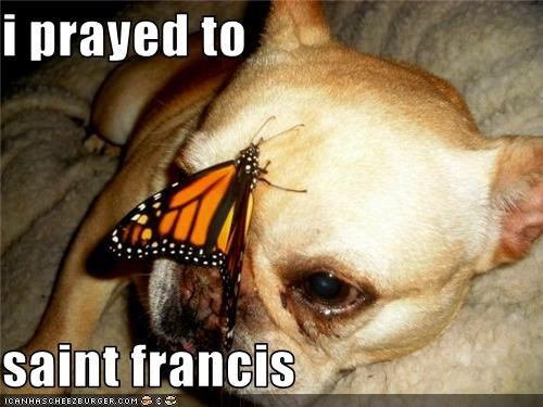 i prayed to  saint francis