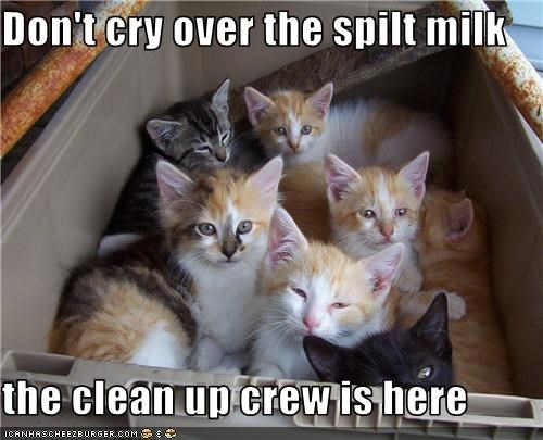 cleaning,cute,helping,ibkc,kitten