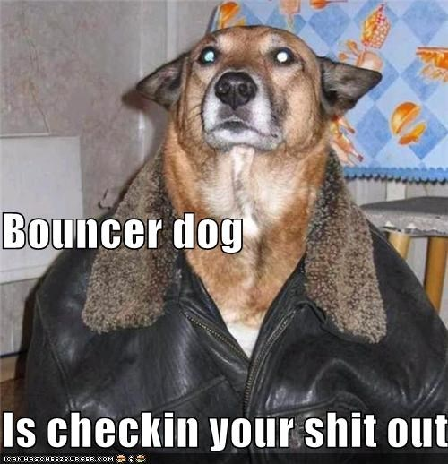 Bouncer dog Is checkin your shit out