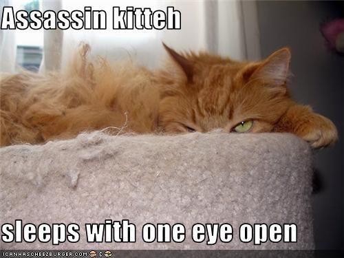 assassin,nap,plotting,sleeping