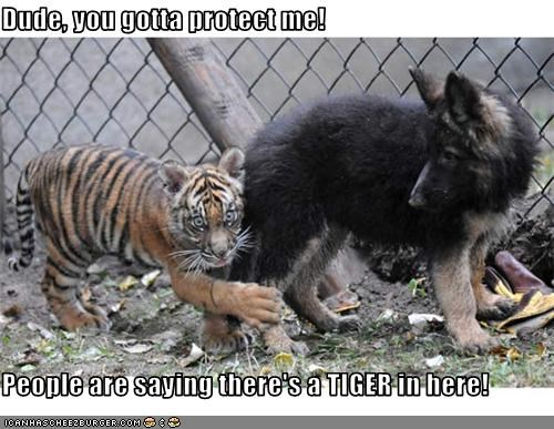 Dude, you gotta protect me!  People are saying there's a TIGER in here!