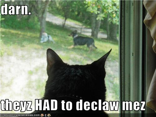 darn.  theyz HAD to declaw mez
