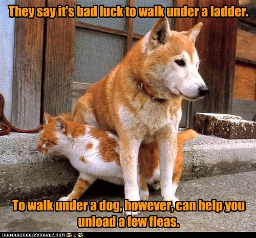 They say it's bad luck to walk under a ladder.            To walk under a dog, however, can help you unload a few fleas.