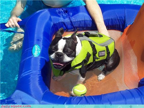 You Have Too Many Pool Accessories For a Dog