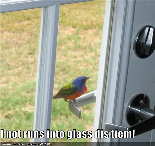 I not runs into glass dis tiem!