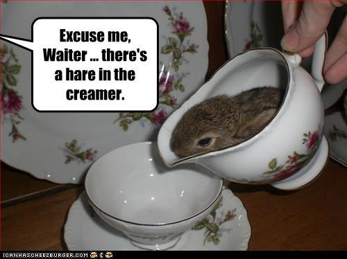 Excuse me,  Waiter ... there's a hare in the creamer.