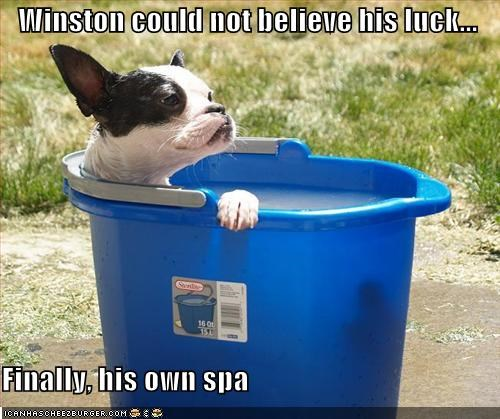 Winston could not believe his luck...  Finally, his own spa
