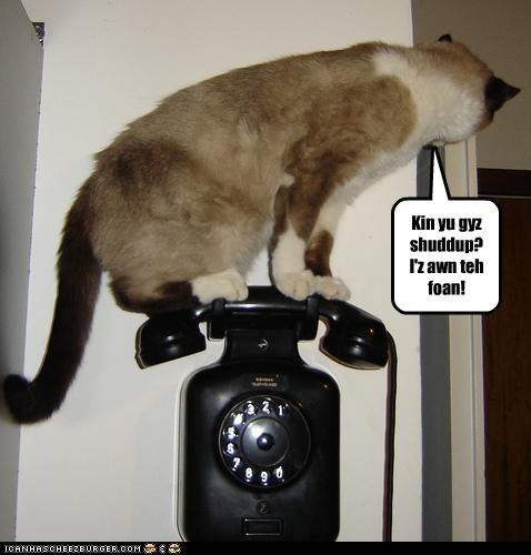 caption,captioned,cat,on,phone,pun,request,shut up,siamese