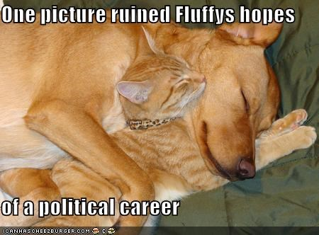 One picture ruined Fluffys hopes  of a political career