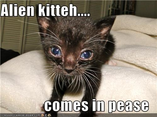 Alien kitteh....  comes in pease