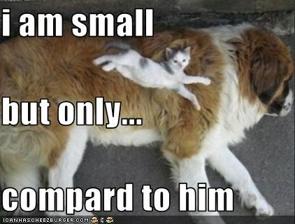 i am small but only... compard to him