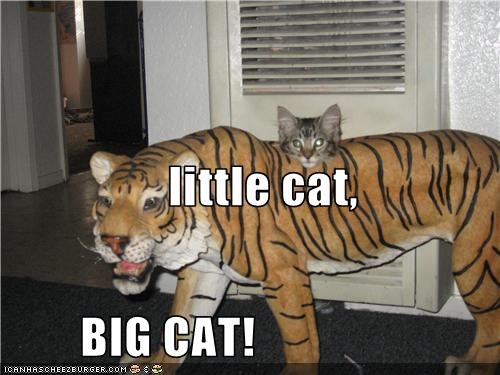 little cat,         BIG CAT!