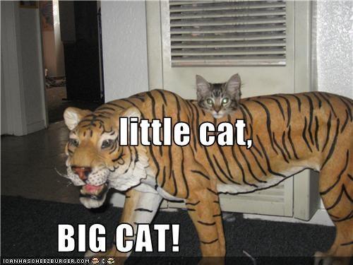little cat,         BIG CAT!