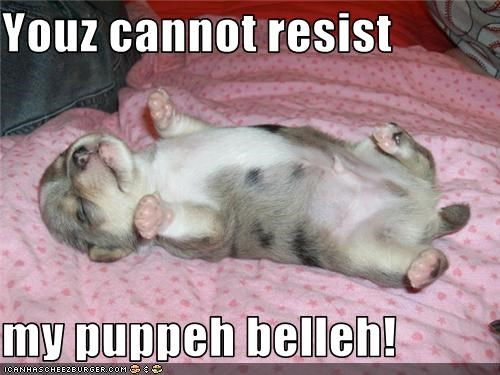 Youz cannot resist  my puppeh belleh!
