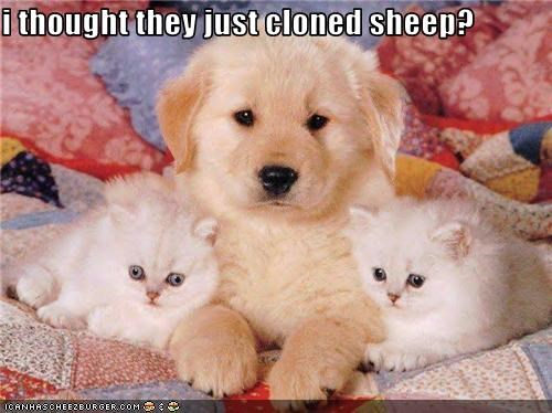 i thought they just cloned sheep?