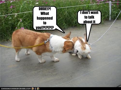 bunny,corgi,Hall of Fame,leashes,magic,shame,surprise,transformation