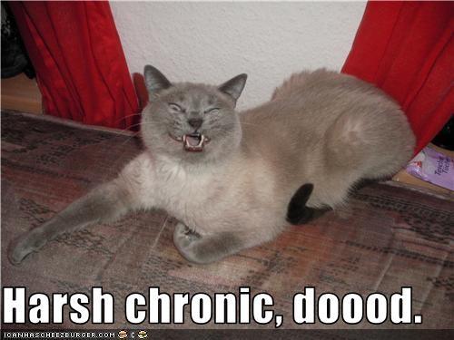 Harsh chronic, doood.