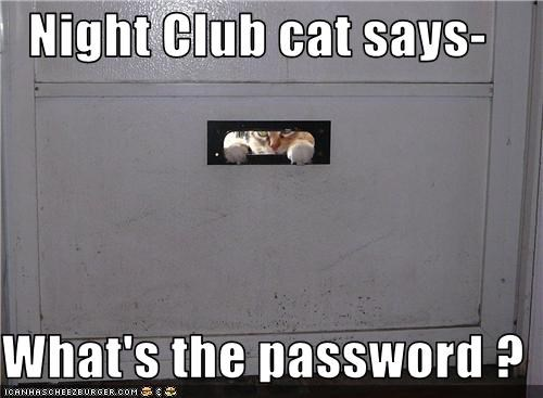 Night Club cat says-  What's the password ?