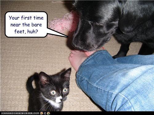 feet,kitten,labrador,shock,smelly