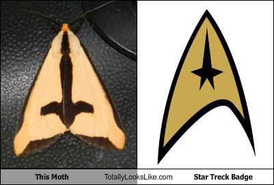 This Moth Totally Looks Like Star Treck Badge