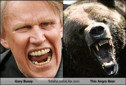 Gary Busey Totally Looks Like This Angry Bear