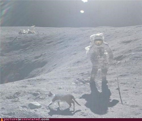 astronaut,cat,moon,space,wtf