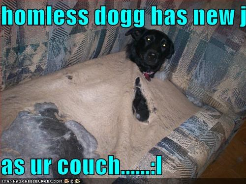 homless dogg has new job..  as ur couch......:I