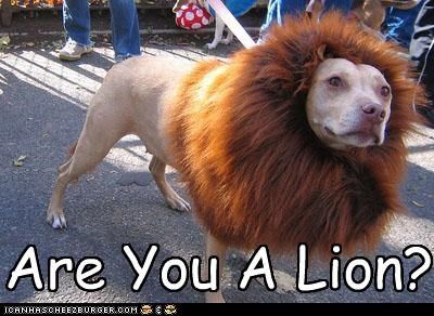 ARE YOU A LION?