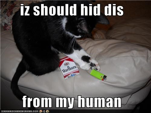 iz should hid dis  from my human