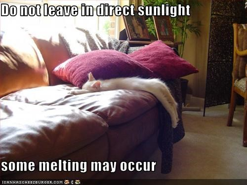 caption,cute,kitten,melting,nap,sunbath